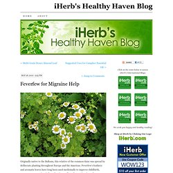 Feverfew for Migraine Help « The Healthy Haven