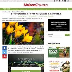 Fiche plante : le crocus jaune d'automne