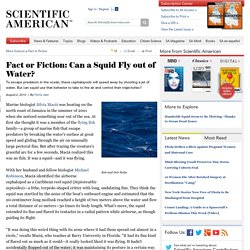 Fact or Fiction: Can a Squid Fly Out of the Water?