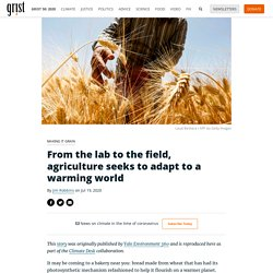 From the lab to the field, agriculture seeks to adapt to a warming world By Jim Robbins on Jul 19, 2020