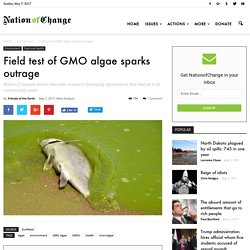 Field test of GMO algae sparks outrage