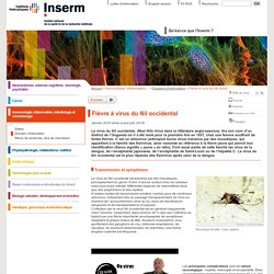 INSERM - JUIN 2015 - Fièvre à virus du Nil occidental.