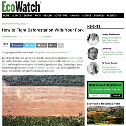 How to Fight Deforestation With Your Fork