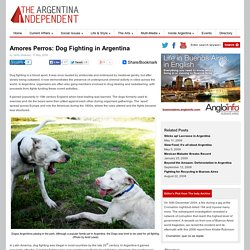 Amores Perros: Dog Fighting in Argentina