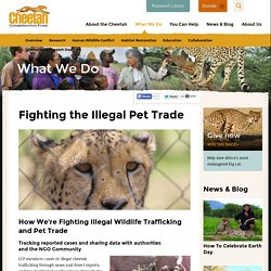 Fighting the Illegal Pet Trade : Cheetah Conservation Fund