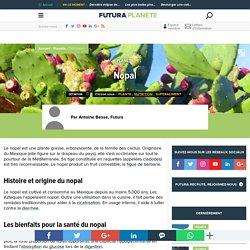 Nopal - Figuier de Barbarie - Opuntia ficus indica