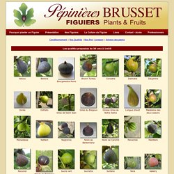 Figuier, Ficus carica : variétés