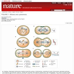 Figure 1 : Cell division : Nature