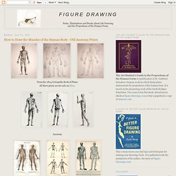 How to Draw the Muscles of the Human Body - Old Anatomy Prints