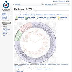 Tree of life - Wikipedia
