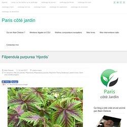 Filipendula purpurea 'Hjordis' – Paris côté jardin