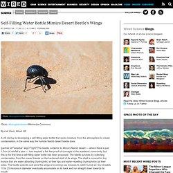 Self-Filling Water Bottle Mimics Desert Beetle's Wings