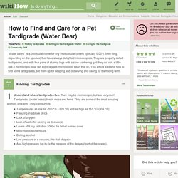 How to Find and Care for a Pet Tardigrade (Water Bear)