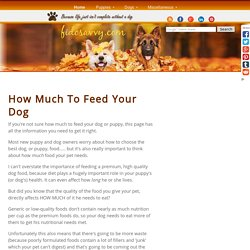 Find Out How Much To Feed Your Dog