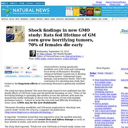 Shock findings in new GMO study: Rats fed lifetime of GM corn grow horrifying tumors, 70% of females die early