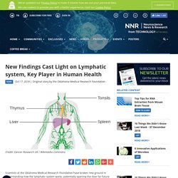 New Findings Cast Light on Lymphatic system, Key Player in Human Health