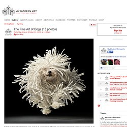 The Fine Art of Dogs (15 photos) - My Modern Metropolis - StumbleUpon