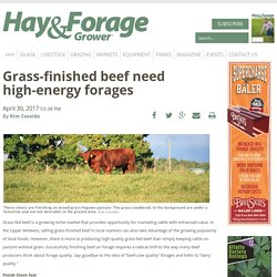 Grass-finished beef need high-energy forages