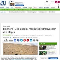 Finistère: Des oiseaux mazoutés retrouvés sur des plages
