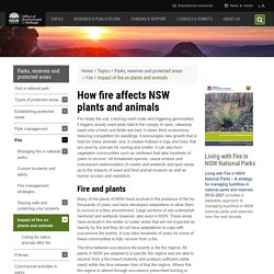 How fire affects NSW plants and animals