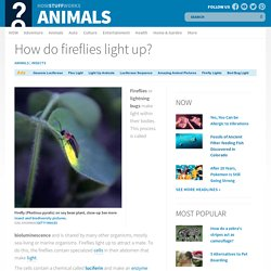 How do fireflies light up