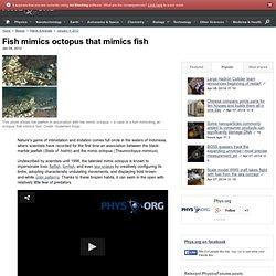 Fish mimics octopus that mimics fish
