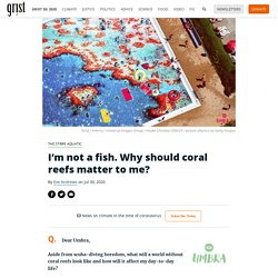 I'm not a fish. Why should coral reefs matter to me? By Eve Andrews on Jul 30, 2020