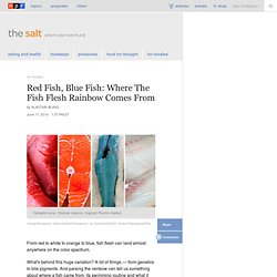 Red Fish, Blue Fish: Where The Fish Flesh Rainbow Comes From