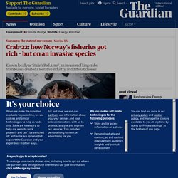 Crab-22: how Norway's fisheries got rich – but on an invasive species