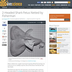 Fisherman Finds 2-Headed Bull Shark