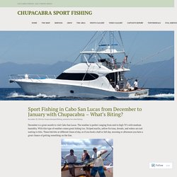Sport Fishing in Cabo San Lucas from December to January with Chupacabra – What's Biting? – Chupacabra Sport Fishing