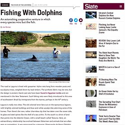 Fishing with dolphins: Symbiosis between humans and marine mammals to catch more fish