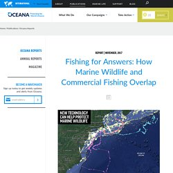 Fishing for Answers: How Marine Wildlife and Commercial Fishing Overlap
