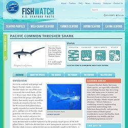 NOAA - FishWatch: Pacific Common Thresher Shark