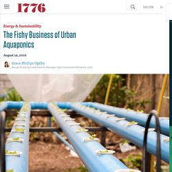 The Fishy Business of Urban Aquaponics - The Fishy Business of Urban Aquaponics