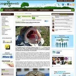 Fishzilla, le poisson dont la tête est mise à prix