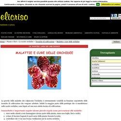 Malattie Orchidee, Cure orchidee, Parassiti orchidee, Fisiopatie, Patologie, Cura orchidee, Insetti orchidee, Funghi orchidea, Cocciniglia orchidee, Afidi orchidea, Acari orchidee, Ragnetto rosso orchidea, Funghi orchidea, Marciume orchidea, Virus orchide