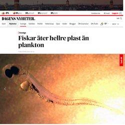 Fiskar äter hellre plast än plankton
