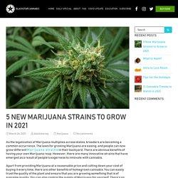 Five Best marijuana strains to grow in year of 2021
