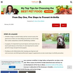 Five Steps to Prevent Arthritis in Dogs