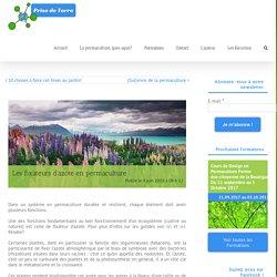 Les fixateurs d'azote en permaculture - Prise de Terre