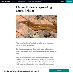 THE TIMES 07/02/20 Obama flatworm spreading across Britain