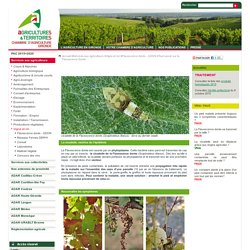 Flavescence dor e en nouvelle aquitaine pearltrees for Chambre agriculture gironde