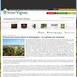 INTERVIGNES 17/12/14 Flavescence dorée 2014 en Bourgogne : la maladie est contenue
