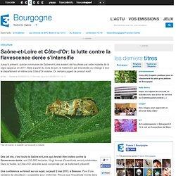 FRANCE 3 BOURGOGNE 03/05/13 Saône-et-Loire et Côte-d'Or: la lutte contre la flavescence dorée s'intensifie