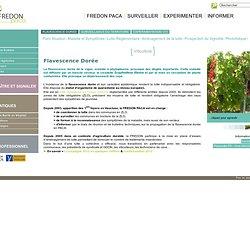 Flavescence Dorée - maladie de la vigne - lutte obligatoire - FREDON PACA