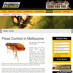 How to Get Rid of Fleas in Your House Permanently in Melbourne?