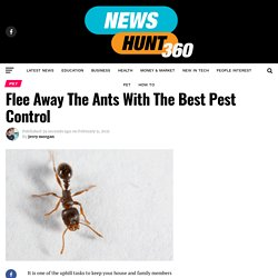 Flee Away The Ants With The Best Pest Control
