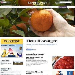Fleur d'oranger - En Provence