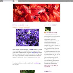 Gelée de Violettes (printemps)
